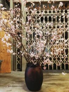 素晴らしい桜をいただきました!!